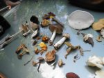 Mushroom walk Kennedy Park, Lenox, MA