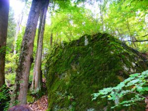 Mossy rock - Hiking Bartholomew's Cobble in the Berkshires, Sept. 2013.