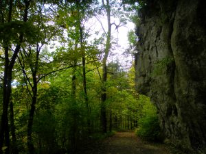 Wooded Trail - Hiking Bartholomew's Cobble in the Berkshires, Sept. 2013.